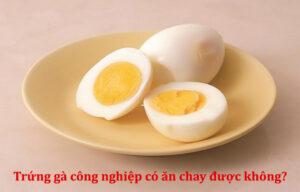 trứng gà công nghiệp có ăn chay được không